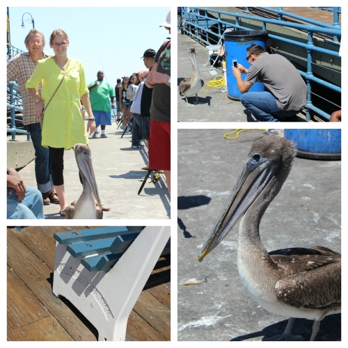 Pelican_pier_collage