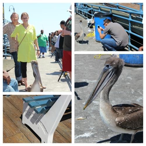 Pelican_pier_collage