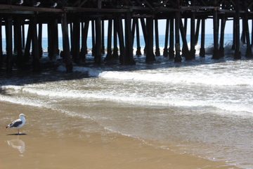 Santa Monica Pier, ocean, california